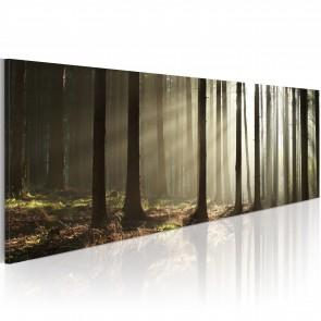 Quadro - Canvas Print - Morning In The Woods 120x40cm Erroi