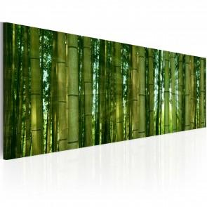Quadro - Canvas Print - Bamboo In The Sunshine 120x40cm Erroi