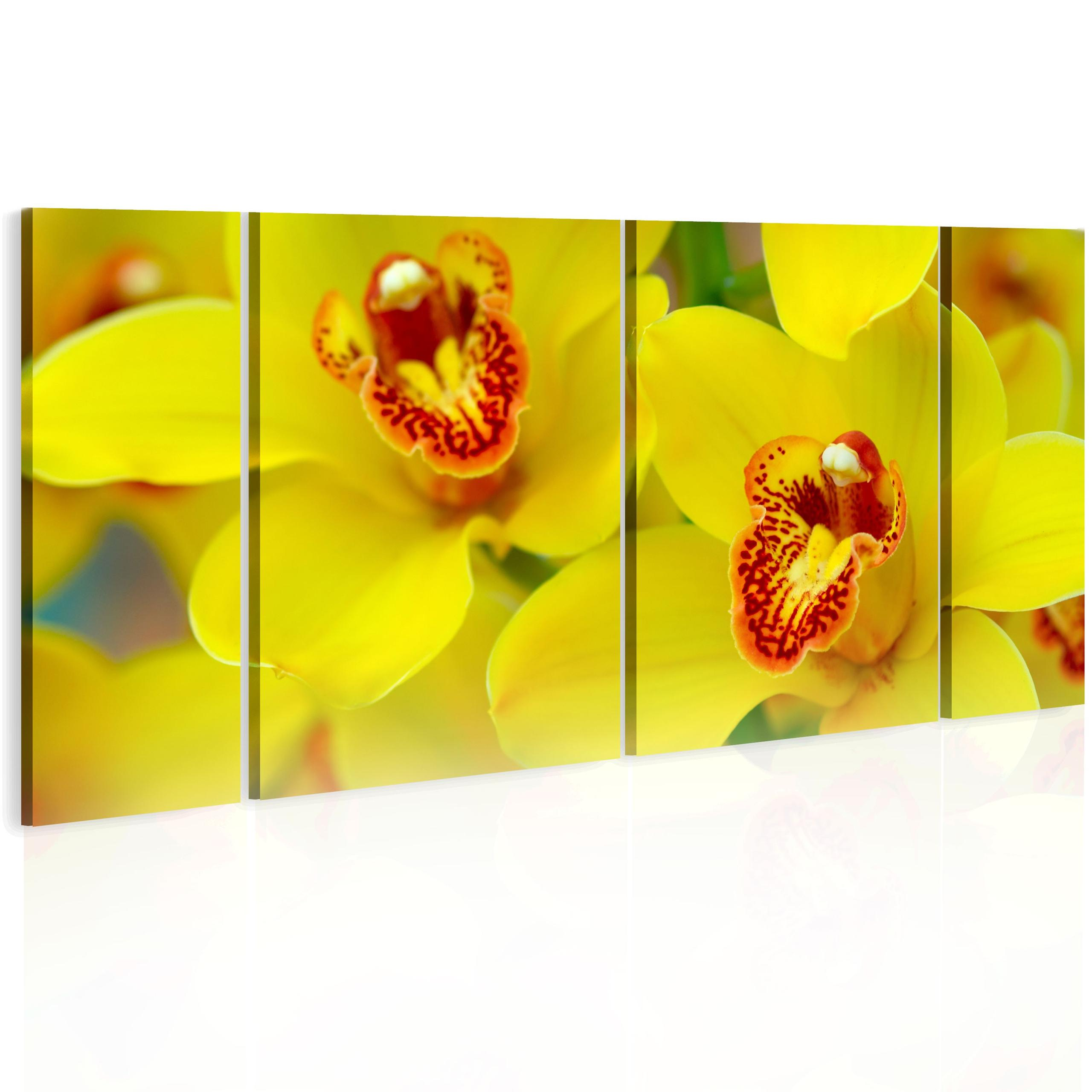 Quadro - Orchids - Intensity Of Yellow Color 60X30Cm Erroi